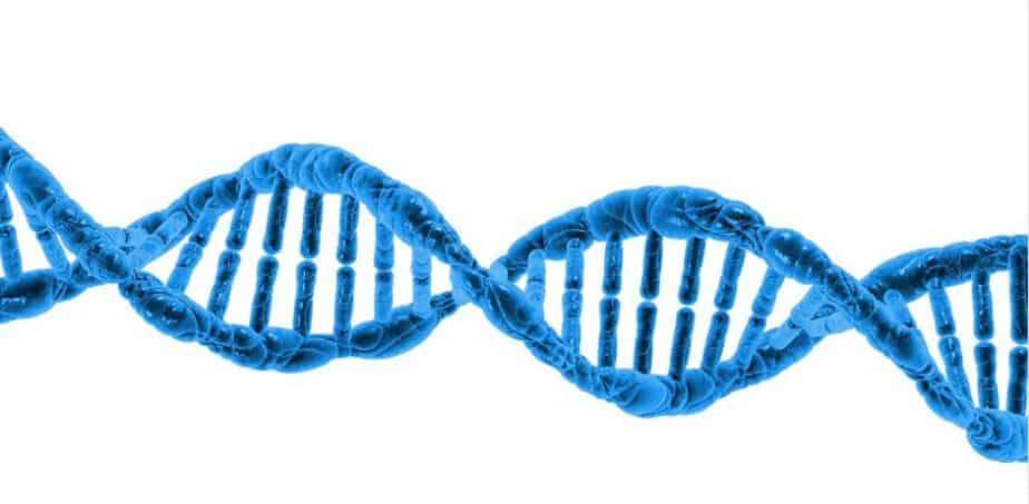 dna paternity test
