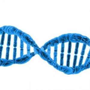 dna oapaternity test